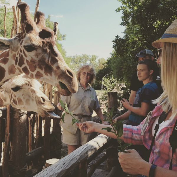 Giraffe feeding - A visit to the Woodland Park Zoo