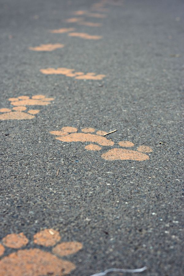 Tiger tracks - A visit to the Woodland Park Zoo